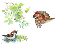 Watercolor colorful Birds and branches with green leaves. Stock Photo