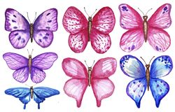 Watercolor colorful butterflies, isolated on white background. blue, pink and violet butterfly spring illustration. Watercolor colorful butterflies, isolated on vector illustration