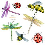 Watercolor colorful dragonflies, bees and ladybugs illustration. Hand painted isolated on a white background Stock Photos