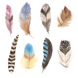 Watercolor colorful feathers set. Watercolor colorful vintage feathers set. Hand painted different bird feathers. Tribal boho aztec clip art for wedding card and stock photos
