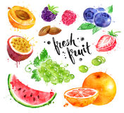 Watercolor colorful illustration set of fresh fruit. Hand drawn watercolor colorful illustration set of fresh fruit and berries with paint splashes royalty free illustration