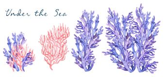 Watercolor colorful illustration of underwater exotic pink, purple and lilac coral samples