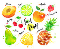 Watercolor colorful set of fruit. Hand drawn watercolor colorful set of fruit with paint splashes royalty free illustration