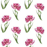 Watercolor colorful spring and summer flowers seamless pattern with pink tulips Royalty Free Stock Photography