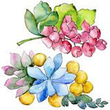 Watercolor colorful tropical bouquet flower. Floral botanical flower. Isolated illustration element. Aquarelle wildflower for background, texture, wrapper royalty free illustration
