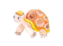 Watercolor colorful turtle Stock Image