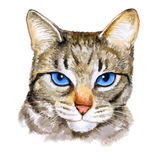 Watercolor colseup portrait of ojos azules breed cat with blue eyes  on white background. Hand drawn home pet Stock Images