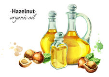 Watercolor composition with bottles of Hazelnut oil and nuts. Hand-drawn watercolor composition with bottles of Hazelnut oil and nuts Royalty Free Stock Photos