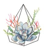 Watercolor composition of cacti and succulents in terrariums geometric florariume isolated on white background. Flower illustration for your projects, greeting vector illustration