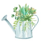 Watercolor composition with succulents, cacti and watering can. Illustration on white background for cards, invitations, weddings, cards, business cards stock illustration