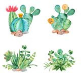 Watercolor composition with succulents, cacti and watering can. Illustration on white background for cards, invitations, weddings, cards, business cards vector illustration