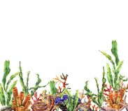 Watercolor coral reef border. Hand painted underwater illustration with laminaria branch, starfish, tridact, mollusk and. Shell isolated on white background Stock Photos