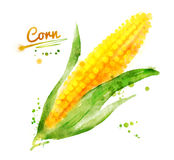 Watercolor corn Stock Photo