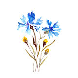 Watercolor Cornflower. Birthday card. Watercolor card with flowers. Festive birthday card Stock Photo