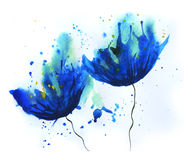 Watercolor cornflower Stock Image