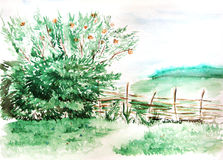 Watercolor countryside field wood forest nature landscape.  Stock Photography