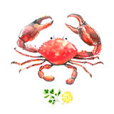 Watercolor crab. Hand draw  illustration on white background. Fresh organic food Royalty Free Stock Photos