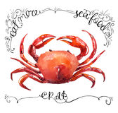 Watercolor crab isolated on white background Stock Image