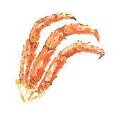 watercolor crabs claws. Royalty Free Stock Photo