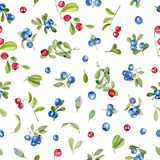 Watercolor cranberry and blueberries seamless pattern. Hand painted on a white background royalty free illustration