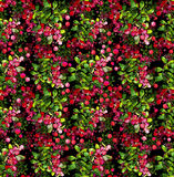 Watercolor cranberry seamless pattern. Christmas floral design Royalty Free Stock Photography
