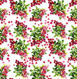 Watercolor cranberry seamless pattern. Christmas floral design Stock Photos