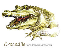 Watercolor Crocodile on the white background. African animal. Wildlife art illustration. Can be printed on T-shirts Stock Photo