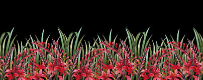 Watercolor crocosmia border Stock Photo