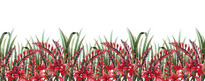 Watercolor crocosmia border Royalty Free Stock Photos