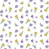 Watercolor crocus pattern royalty free illustration
