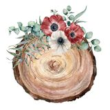 Watercolor cross section of a tree with anemone bouquet. Hand painted red and white flowers and eucaliptus leaves on. White background. Illustration for design vector illustration