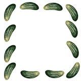 Watercolor cucumber Stock Photos