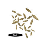 Watercolor cumin seeds  on white  background Stock Image