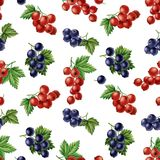 Watercolor currants seamless pattern. Royalty Free Stock Photo