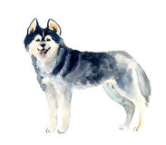 Watercolor cute dog