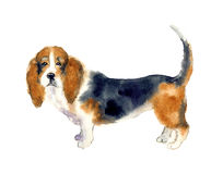 Watercolor cute dog. Dachshund watercolor illustration. Portrait small dog. Watercolor hand drawn funny sketch. Animal silhouette sketch. Vintage graphic for Royalty Free Stock Photography