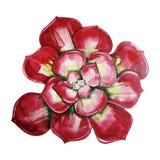 Watercolor cute succulent stock photos