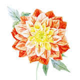 Watercolor dahlia flowers Stock Photo