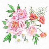 Watercolor Daisies Isolated On White Background Large Beautiful Bouquet Of Pink Peonies Red Poppies And Royalty Free Stock Photos