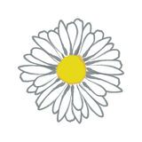 Watercolor daisy. White  daisy in a watercolor style Stock Photos