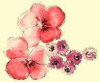 Watercolor of daisy and sakura Stock Photos