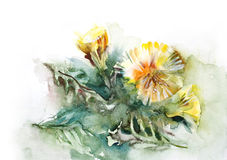 Watercolor-Dandelion- Royalty Free Stock Photo