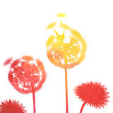 Watercolor dandelion background Royalty Free Stock Image