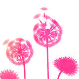 Watercolor dandelion background on a white background Royalty Free Stock Photo
