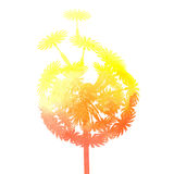 Watercolor dandelion. On a white background Stock Image