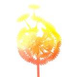 Watercolor dandelion Stock Image