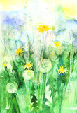 Watercolor dandelions in the garden Royalty Free Stock Photography