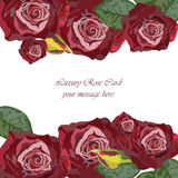 Watercolor Dark Red Rose card Stock Photography