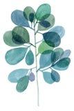 Watercolor decorative blue green branch stock photos