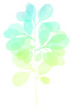 Watercolor decorative green blue branch Royalty Free Stock Images
